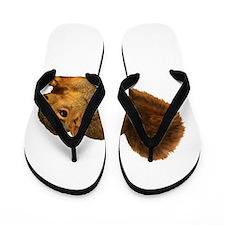 Squirrell Flip Flops