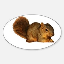 Squirrell Decal