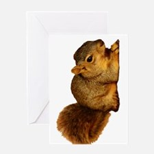 Squirrell Greeting Cards