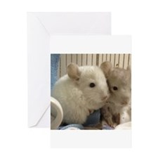 Chinchilla Babies Greeting Cards