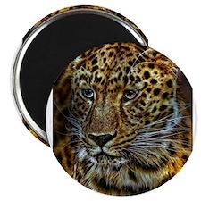 Jaguar Magnets