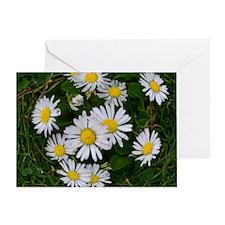 Daisy Chic Greeting Card