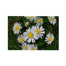 Daisy Chic Rectangle Magnet