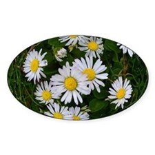 Daisy Chic Decal