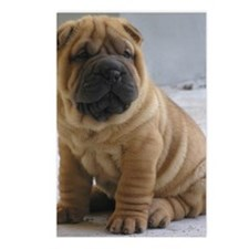 Sharpei Postcards (Package of 8)