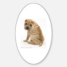 Sharpei Decal