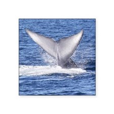 "Majestic Blue Whale Flukes Square Sticker 3"" x 3"""