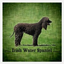 Irish Water Spaniel Invitations