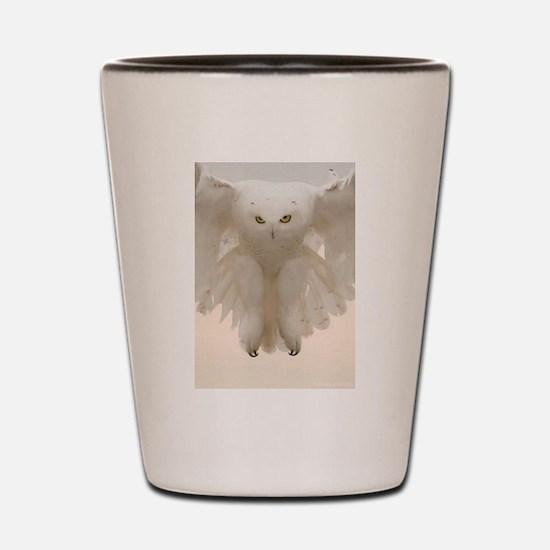 Funny Owl Shot Glass