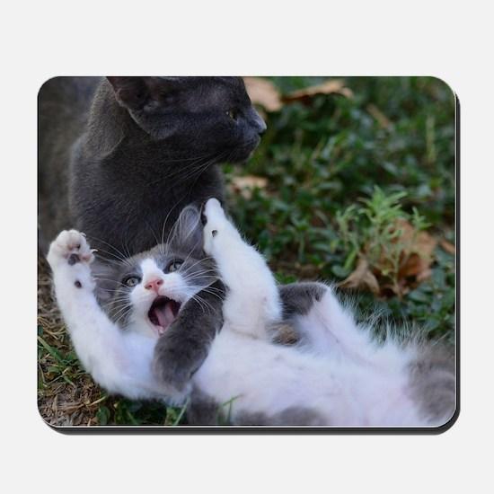 Playful Cats Mousepad