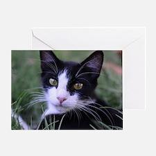 Cute Cat pose Greeting Card