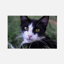 Funny Black white tuxedo kitty Rectangle Magnet