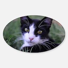 Cute Cat theme Sticker (Oval)