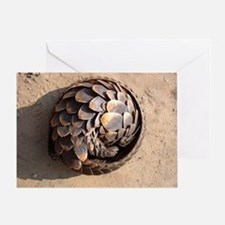 curled up pangolin Greeting Card