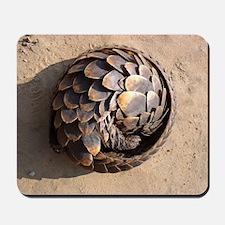 curled up pangolin Mousepad
