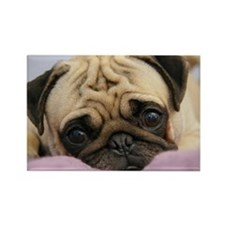 Pug Puppy Rectangle Magnet