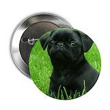 Pugs Buttons