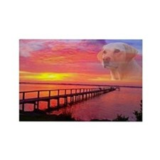Blond Labrador Retriever Magnets