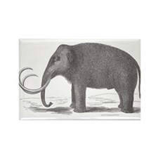 Woolly Mammoth Magnets