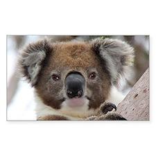 Precious Baby Koala in Eucalyptus G Decal