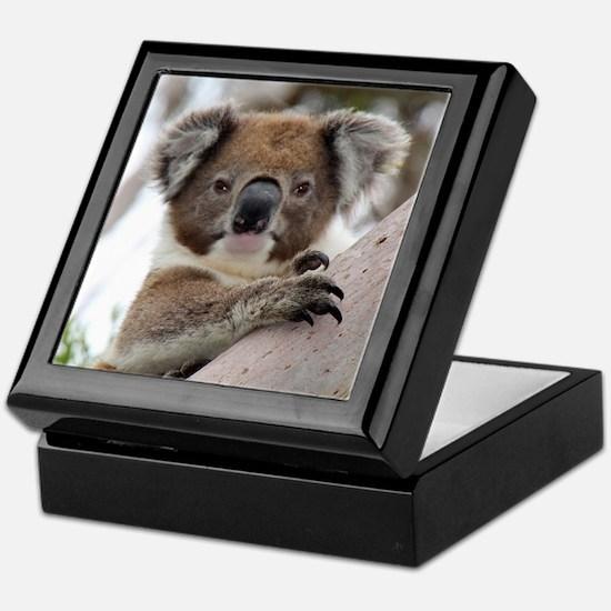 Unique Koala bear Keepsake Box