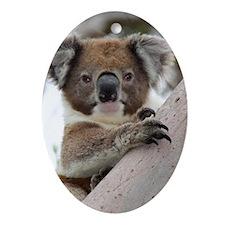 Cute Koala bear Ornament (Oval)