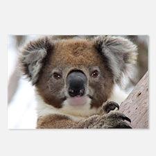 Funny Australian bear Postcards (Package of 8)