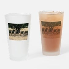 Cute Funny animal photos Drinking Glass