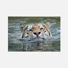 Tiger005 Magnets