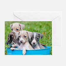 Italian Greyhound Puppies Greeting Card
