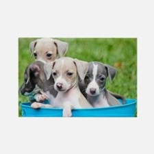Italian Greyhound Puppies Rectangle Magnet