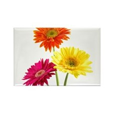 Daisy Gerbera Flowers Magnets