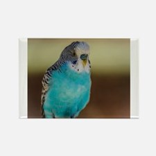 Blue Budgie Magnets