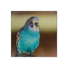 Blue Budgie Sticker