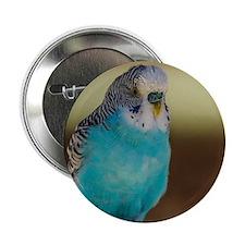 "Cute Colorful cartoon lovebirds 2.25"" Button (10 pack)"