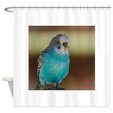 Cute Quaker parrots Shower Curtain