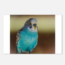Blue budgie Postcards (Package of 8)