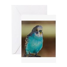 Blue Budgie Greeting Cards