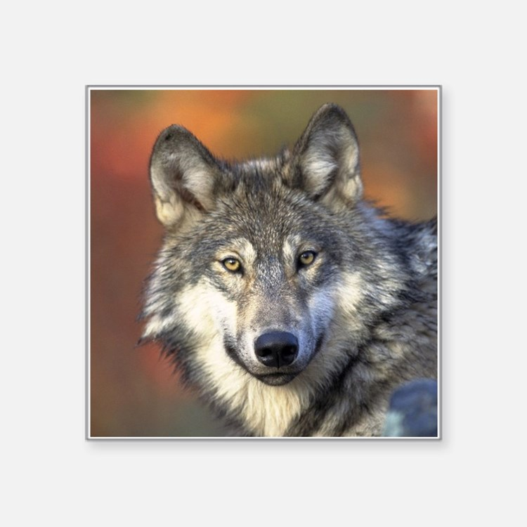 grey wolf car accessories auto stickers license plates. Black Bedroom Furniture Sets. Home Design Ideas