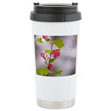 Red-flowering currant,  Travel Mug