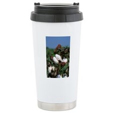 Cotton ready for harves Travel Mug
