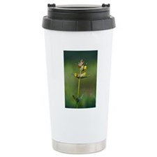 Yellow rattle (Rhinanth Travel Mug