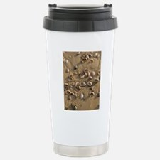 Slipper Limpet (Crepidu Travel Mug