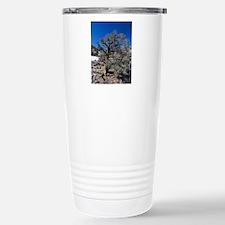Singleleaf pinyon pine  Travel Mug