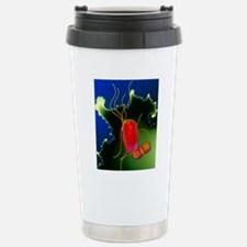 Proteus bacteria Stainless Steel Travel Mug