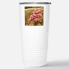 Pseudomonas aeruginosa  Travel Mug