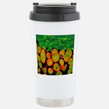 Mycoplasma bacteria, TE Travel Mug