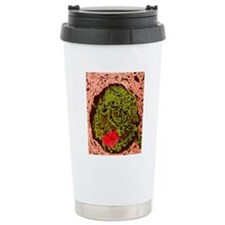 Anthrax bacteria in the Travel Mug