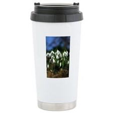 Snowdrops (Galanthus sp Travel Mug
