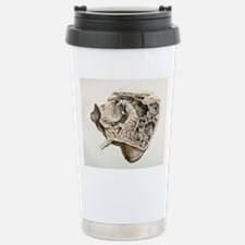 Middle ear anatomy, 184 Travel Mug